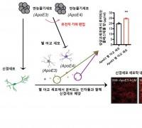 사람 만능줄기세포 이용해 알츠하이머 치매 발병 과정 규명